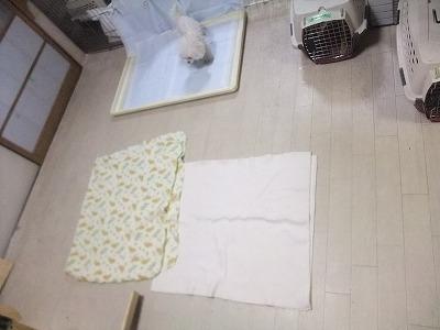 111217koyuki.jpg