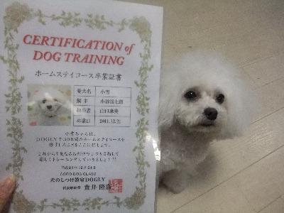 111221koyuki.jpg