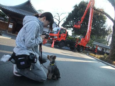 kaito110207.jpg