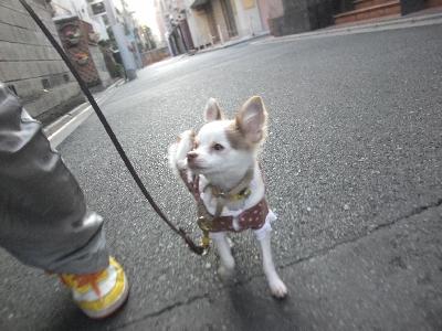saityoko0116.jpg