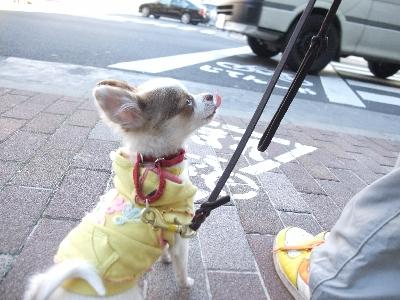 saityoko0118.jpg