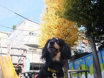 t-kotarou101205.jpg