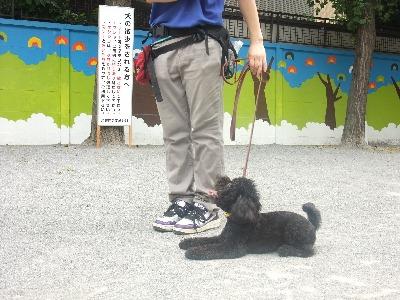 w-gojira016.jpg