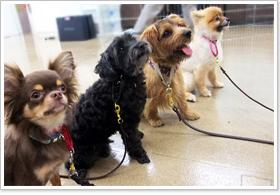 犬の食糞と3つの原因!やめさせる為の効果的な対策まとめ | WanDo!(ワンドゥ)